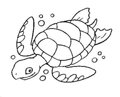 Print Desenhos Tartaruga Marinha Para Pintar