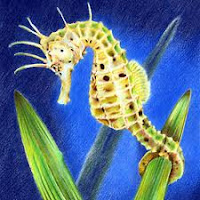 Immagini da colorare di animali marini il miglior web for Immagini fondali marini da colorare