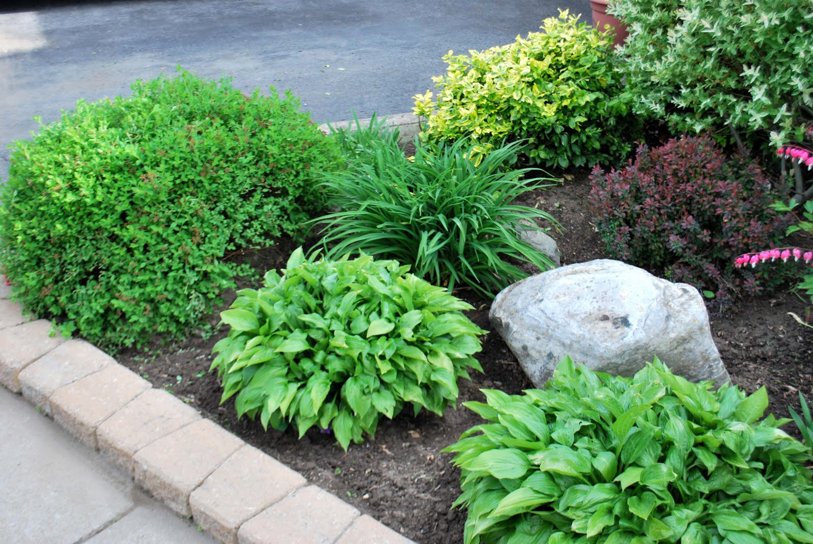 A crafty mom 39 s blog the front garden for Backyard landscaping plants