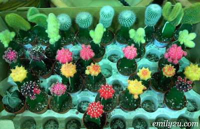 Cacti & Monkey Cup