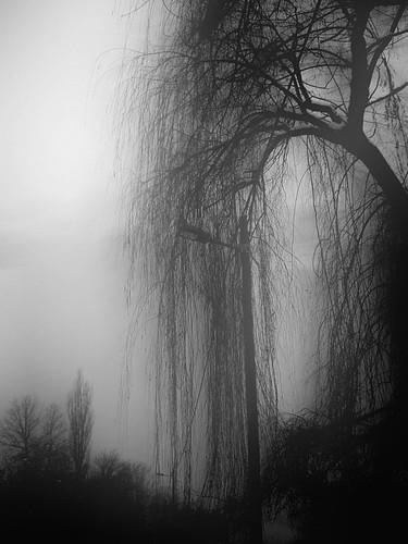 Black and white ebony tonewood