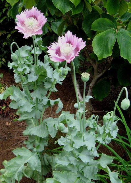 Quarry Shade Garden At Bon Air Park: Seattle Garden Ideas: Healing Gardens