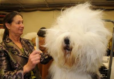 http://4.bp.blogspot.com/_73t8OI7zdgo/Sj6XGTXKVBI/AAAAAAAAANM/MWRY5NVVNcU/s400/dog-grooming.jpg