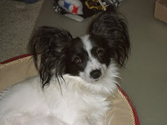 THE PAPILLON PRINCESS MAGGIE