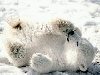 This is a picture of a Polar Bear cub. It has nothing to do with technical PR or ALT tags, it is merely an example and a good reason to save energy.
