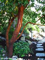 Shade garden sentry