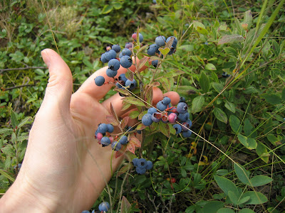 Northern Exposure Gardening: Northern Wild Berries and other