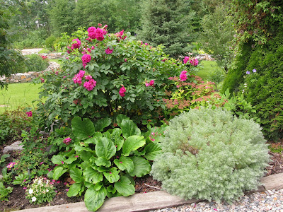 Northern Exposure Gardening Roses And Lilies Late And