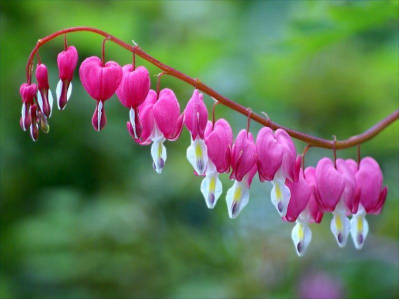 Imagens Das Flores Mais Bonitas Do Mundo