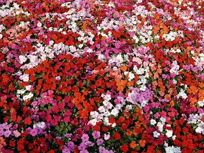 Wallpaper Cute Girl Free Download Artful Flowers Wallpapers Free Download Flower