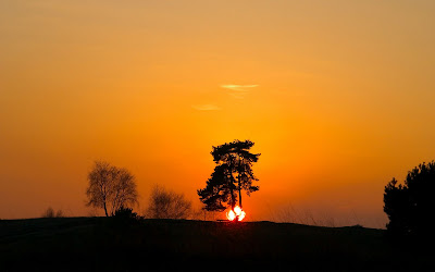 Cute Cute Hd Wallpapers Sunset Celebration Behind The Tree Images Nature Sunset