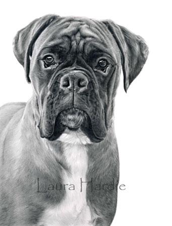 Laura Hardie : Boxer finished