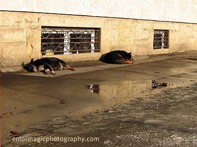 Two dogs lying on the sidewalk