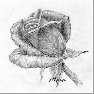 Beautiful rose-pencil drawing