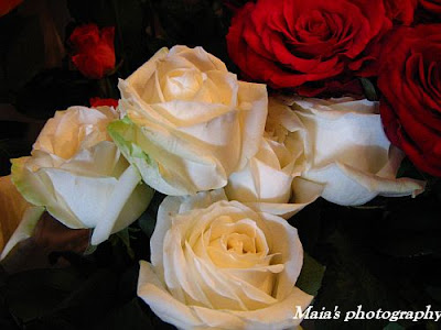 A bunch of white and red roses