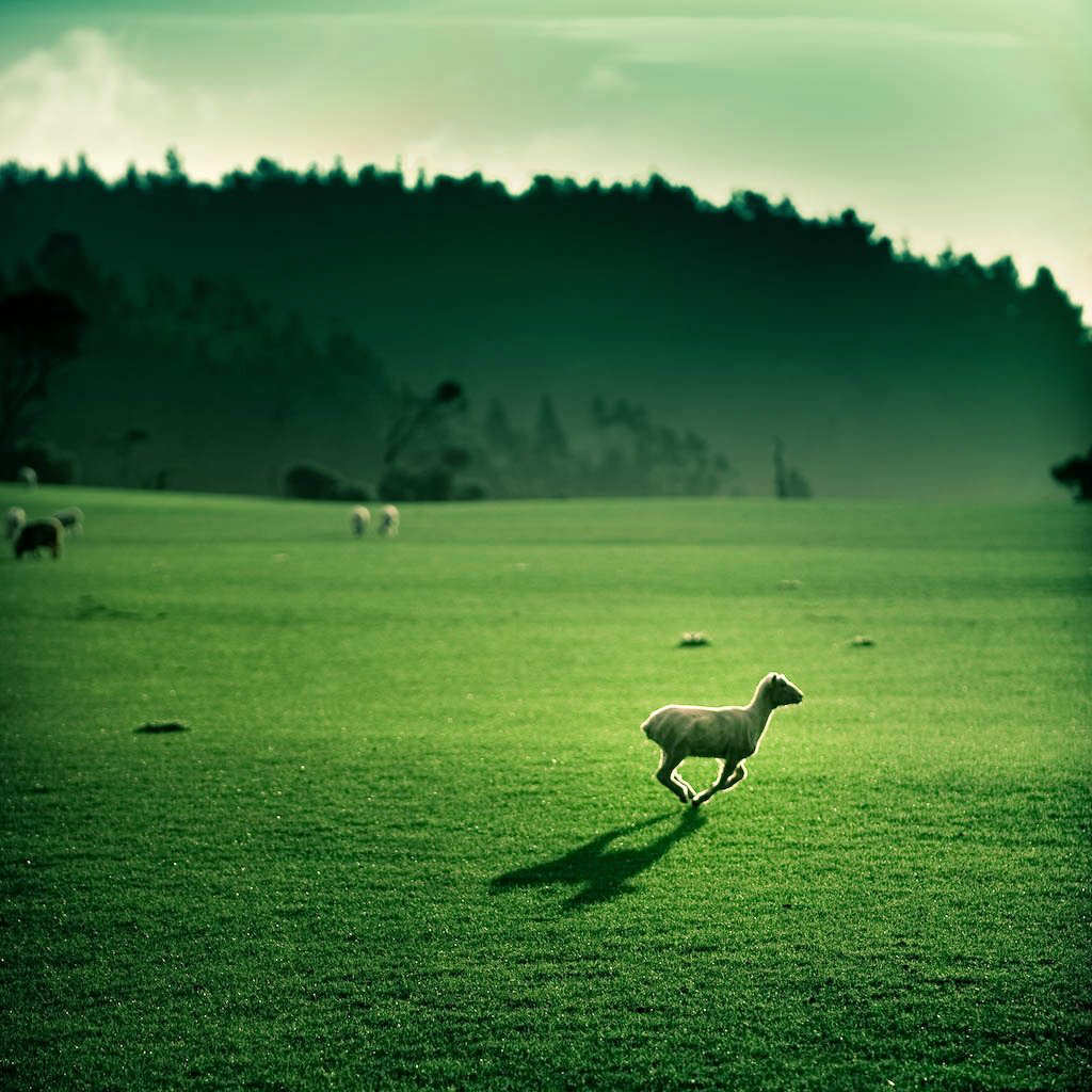 Beautiful Examples of Green Photography - photo#13
