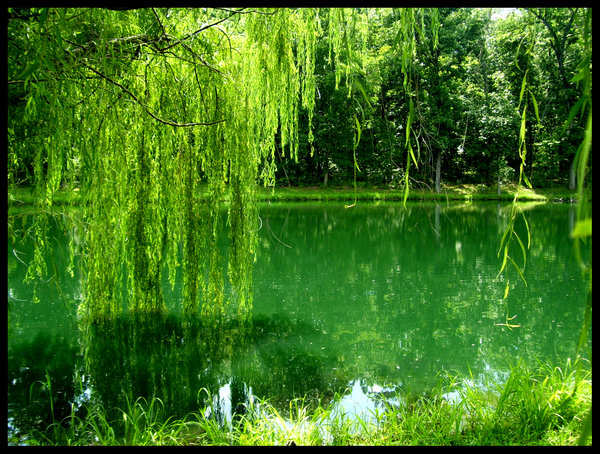 Beautiful Examples of Green Photography - photo#12