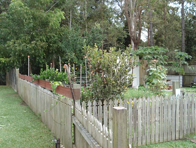 The Brown Top On The Fence Above Is The Plastic Addition That Stopped  Shaneu0027s Chook Getting Into The Vegetable Garden. Itu0027s Just A Strip Of  Gutter Guard.