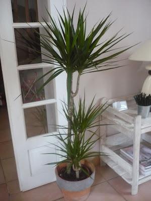 plante ikea interieur ikea lanceert design keuken met karakter for interieur ikea with plante. Black Bedroom Furniture Sets. Home Design Ideas