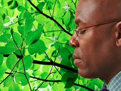 MeditationAsheville org • Transcendental Meditation Courses