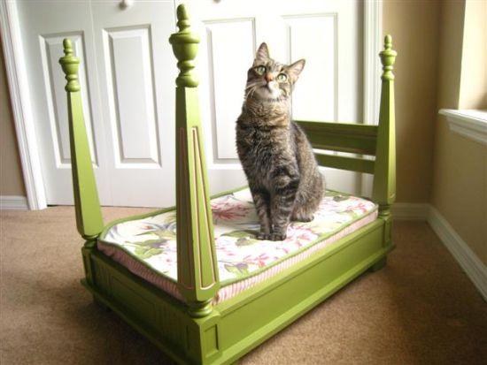 Cómo Hacer Una Cama De Lujo Para Tu Querido Gato