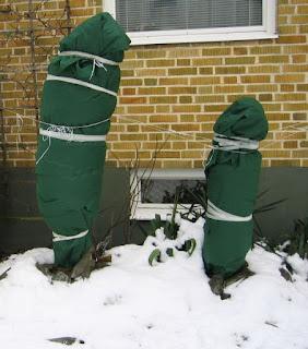 protejarea plantelor in gradina de inghet si ger, folie protejare plante, invelire plante iarna