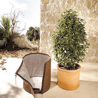 invelire ghivece exterior in perioada de iarna , ger , protejare plante iarna