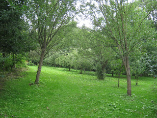 Walbottle Community Orchard