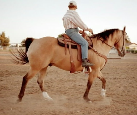 Desert Equine Balance Epsm Pssm And A Quarter Horse Named Doc