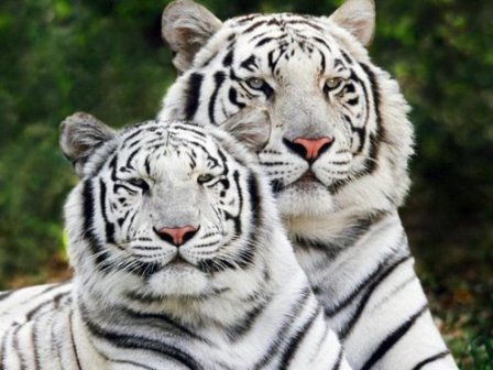 3d Holi Wallpapers Free Download Desktops Backgrounds Free Wildlife Amp Animal Wallpapers