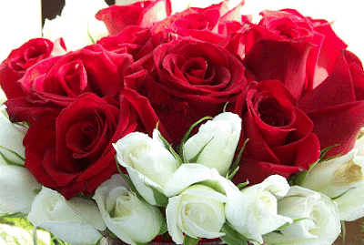 Valentine Roses Flowers Wallpapers