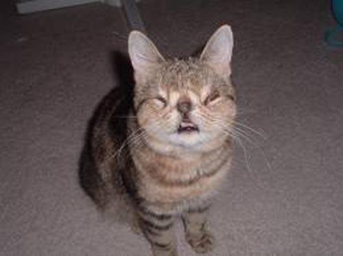 FUNZONE: World's Ugliest Cat