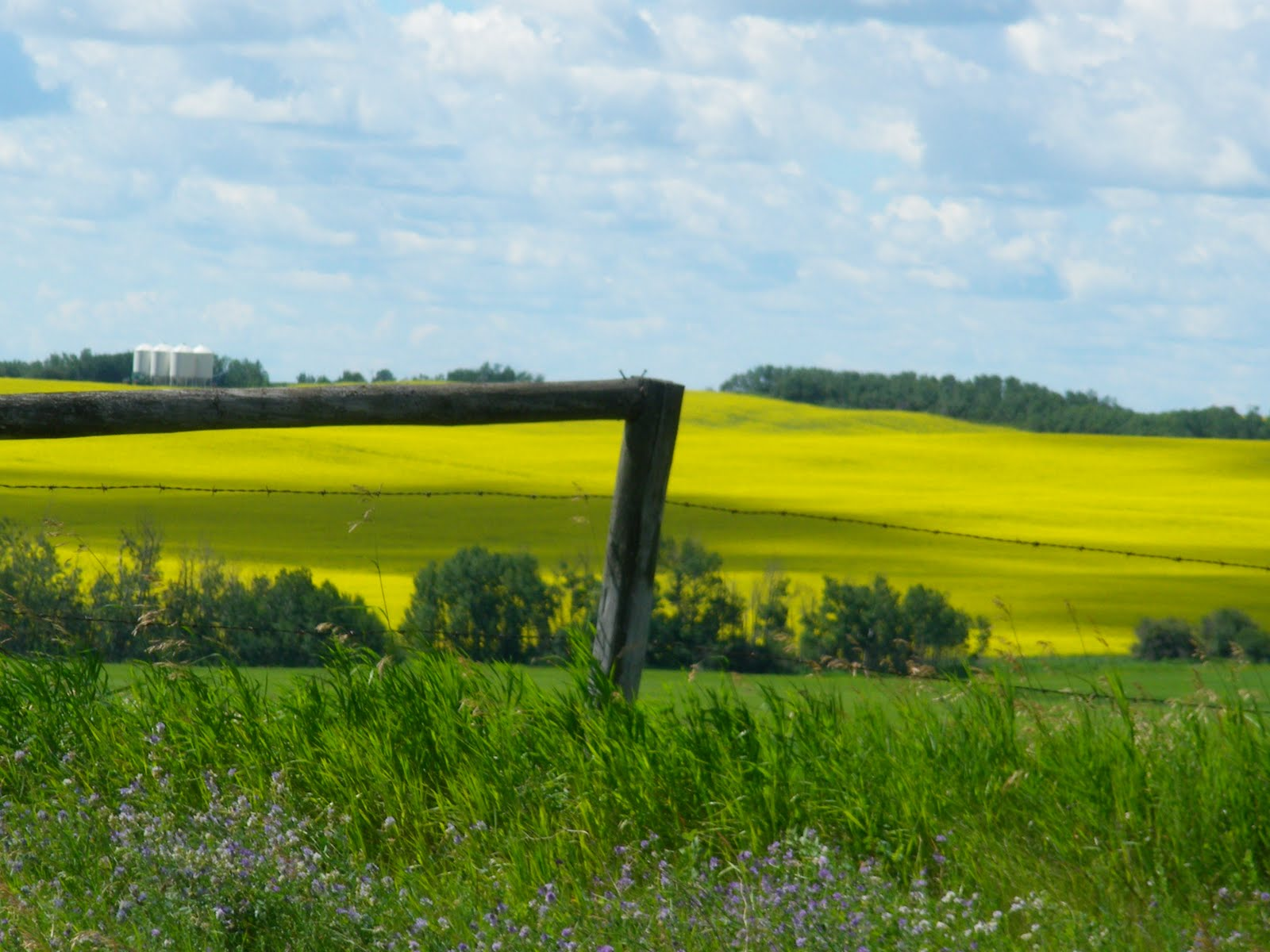 Canola Fields Quotes: Have 1 Airstream Will Travel