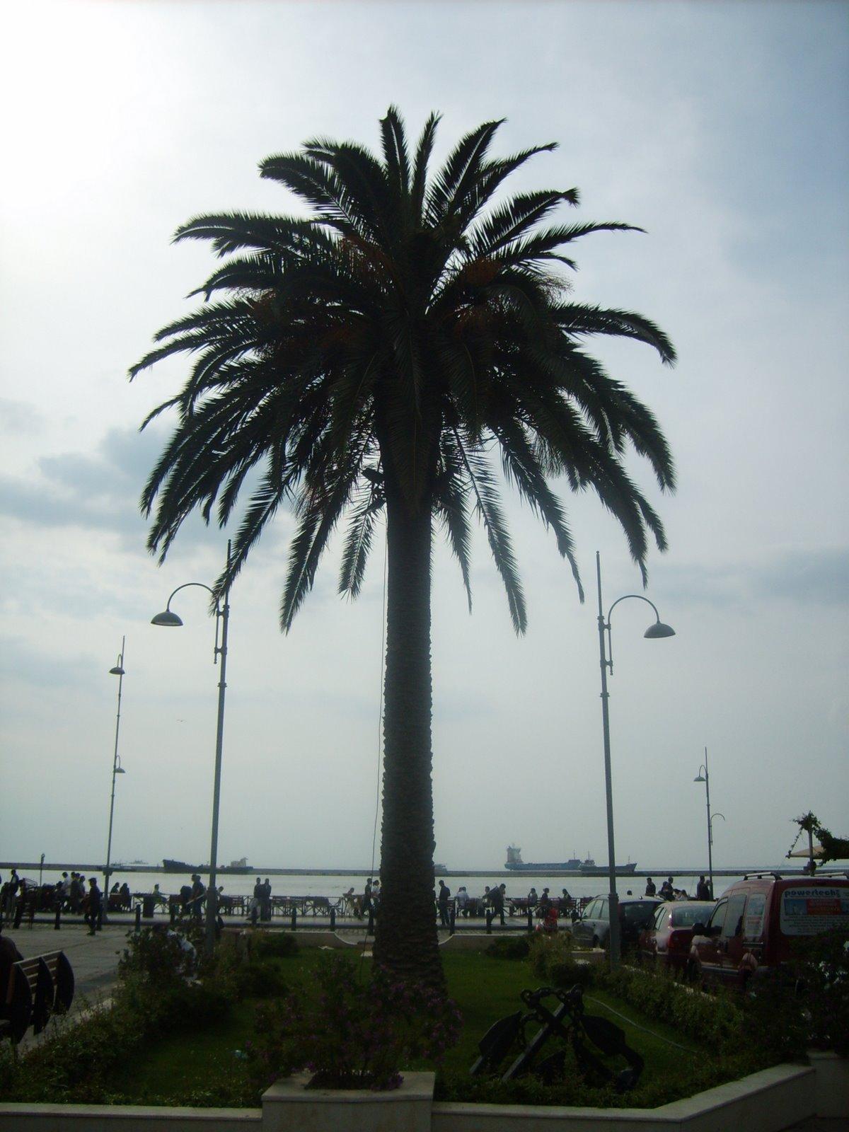 İki Ayrı Palmiye Yaprağı Örneği Video Yapılışı
