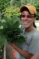 Freshly picked kale