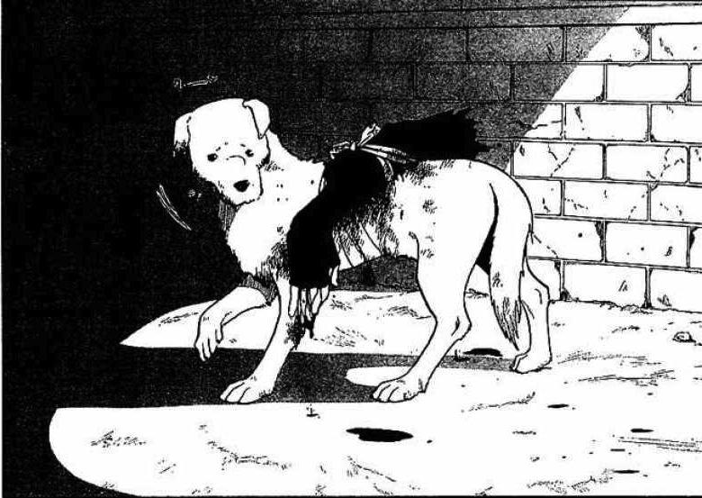 herbe brûlée urine chien