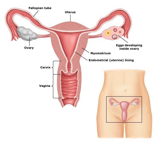 V OTRE: Do Not Neglect Your Second Trimester Pregnancy Diet