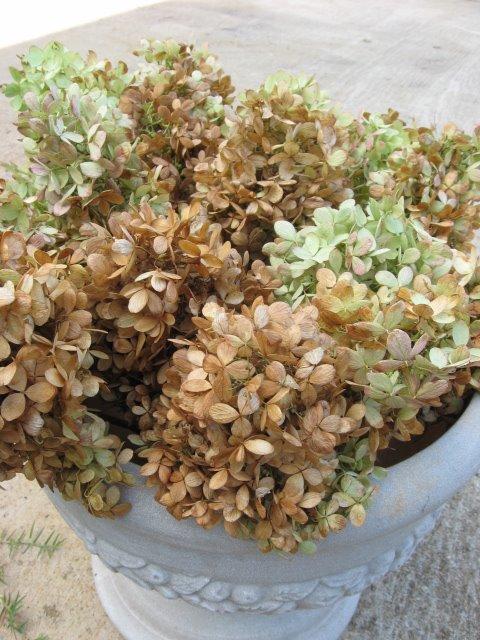 Harvesting Hydrangeas - Southern Hospitality