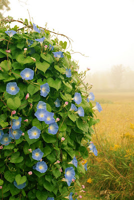 outdoor-wednesday-morning-glory-selep-imaging