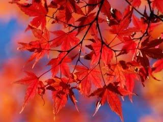 Pozadine Za Mobitele Crveno Lišće Jesen