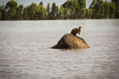 "Try this headline on for size.....................................                                   ""AUSTRALIA FACES 'BIBLICAL' FLOODS"""