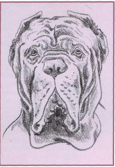Native Bandogge Kennels: Ultimate Dog Neapolitan Bull ...