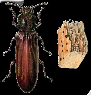 tapisserie ameublement et restauration mobilier traitement de vos meubles contre les insectes. Black Bedroom Furniture Sets. Home Design Ideas