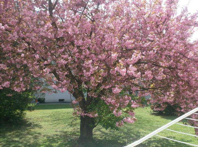 vanilleherz und mandarinenduft rosa bl hender baum