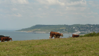 Hills above Charmouth