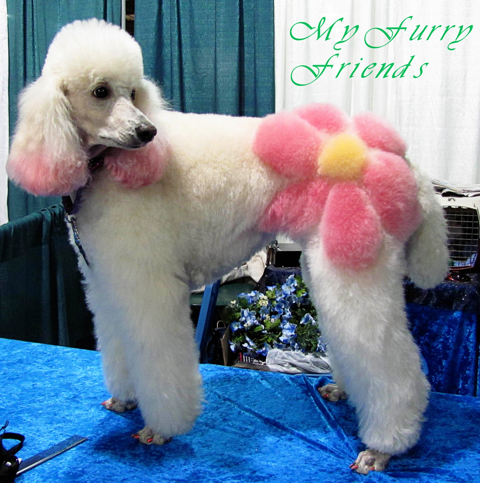 Image Result For Haircuts For Long Hair Dogsa