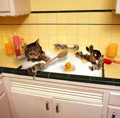 Cute Cats And Little Kittens How To Bath A Cat Easily