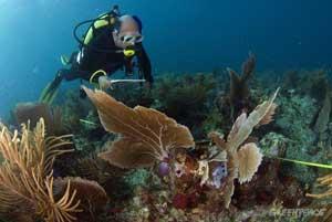 arrecifes coral campeche