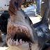 Un tiburón con comportamiento anormal, mata a una turista en Egipto