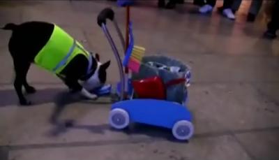 Servicio de limpieza canino